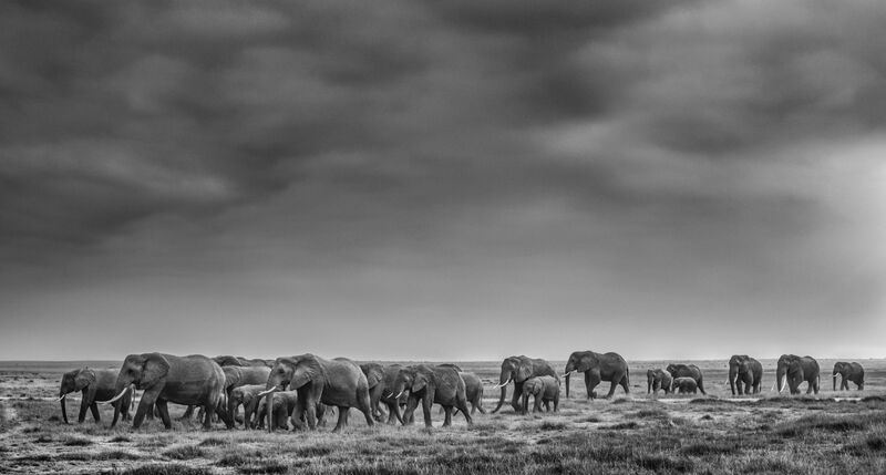 David Yarrow, 'We Are Family', 2020, Photography, Archival Pigment Print, Hilton Asmus
