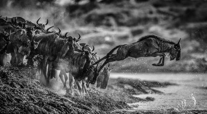 David Yarrow, 'Follow the Leader', 2020, Photography, Archival Pigment Print, Maddox Gallery