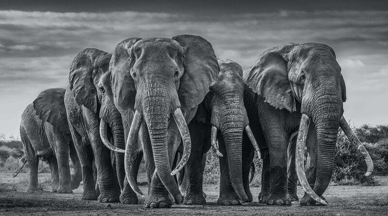 David Yarrow, 'The Pack', 2019, Photography, Archival Pigment Print, Maddox Gallery