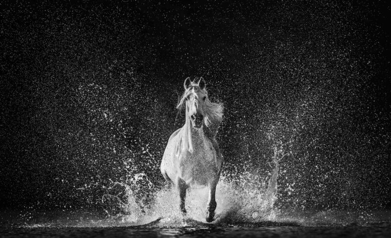 David Yarrow, 'The Shape of Water', 2020, Photography, Digital Pigment Print on Archival 315gsm Hahnemuhle Photo Rag Baryta Paper, Samuel Owen Gallery