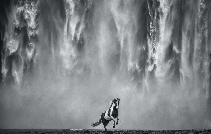 David Yarrow, 'Legends of the Fall', 2020, Photography, Archival Pigment Print, Samuel Lynne Galleries