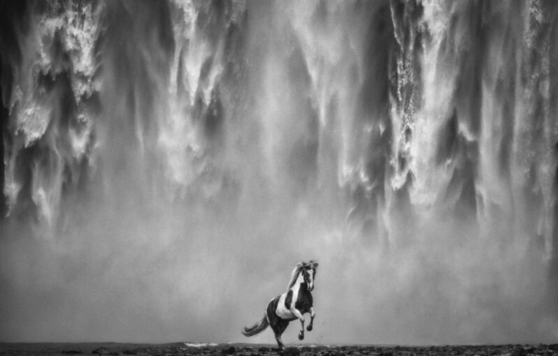 David Yarrow, 'LEGENDS OF THE FALL', 2020, Photography, Digital Pigment Print on Archival 315gsm Hahnemuhle Photo Rag Baryta Paper, Isabella Garrucho Fine Art