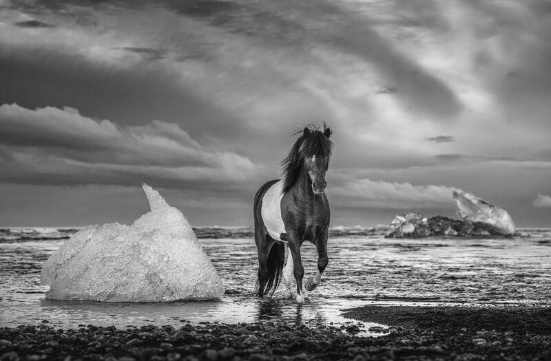 David Yarrow, 'On the Rocks', 2020, Photography, Archival Pigment Print, Samuel Lynne Galleries