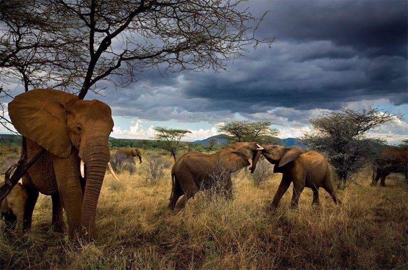 Michael Nichols, 'Virtues family, Samburu National Reserve, Kenya', 2007, Photography, Pigment print, Aperture Foundation