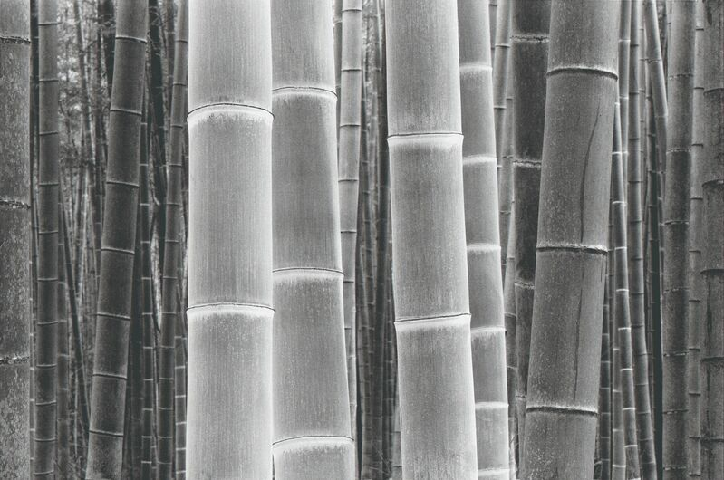 DaeSoo Kim, 'Colors Of The Bamboo', Photography, Silver Gelatin, Gallery 270