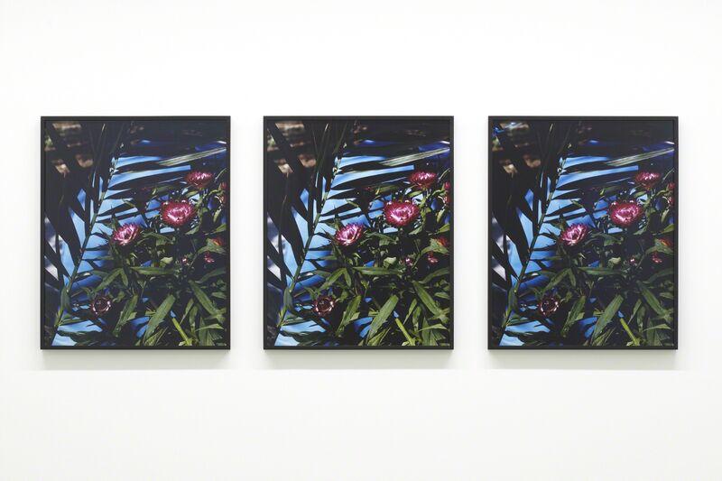Annette Kelm, 'Strawflowers', 2013, Photography, C-print, Taka Ishii Gallery