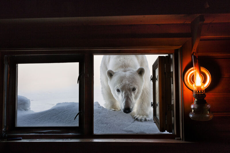 Paul Nicklen, 'Face to Face', 2008, Photography, Archival Pigment Print, Hilton Asmus