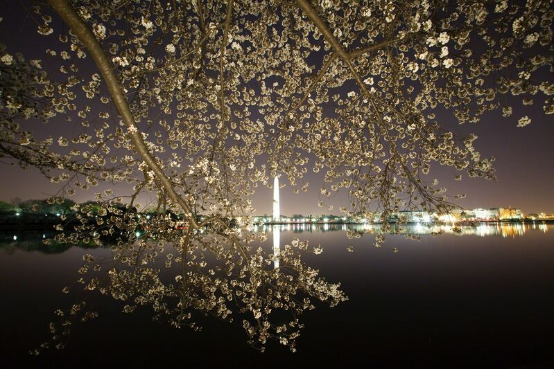 Frank Hallam Day, 'Cherry Blossoms #44', 2012, Photography, Archival pigment print, Addison/Ripley Fine Art