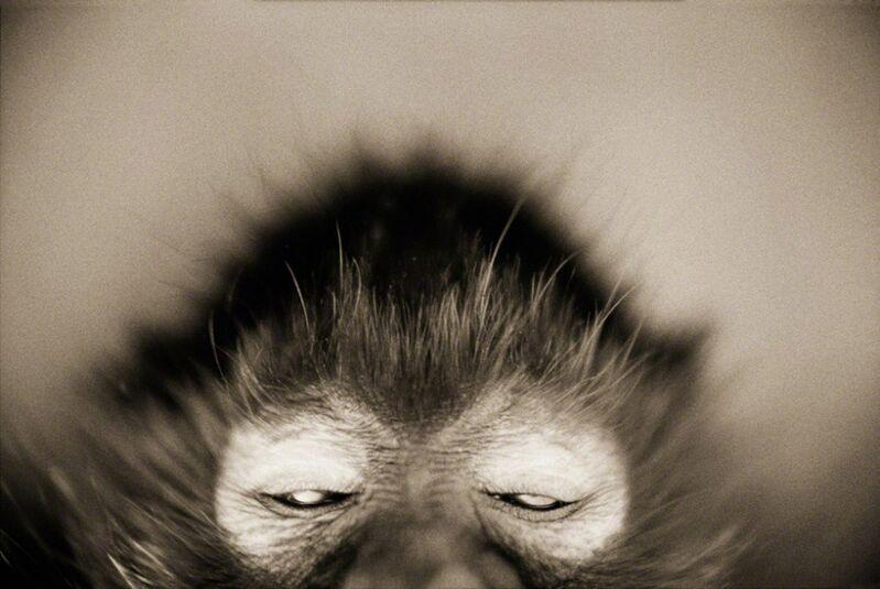 Henry Horenstein, 'White-cheeked Spider Monkey (Ateles marginatus)', ca. 1995-2001, Photography, Chromogenic print, ClampArt