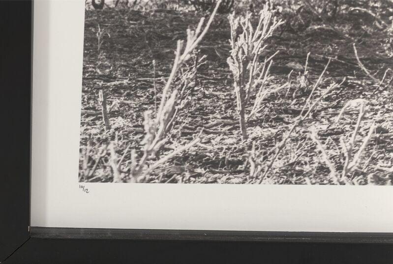 David Yarrow, 'Lugard', 2016, Photography, Digital pigment, Heritage Auctions