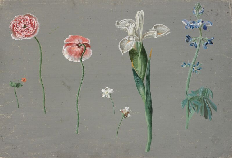 Johann Christian August Birnbaum, 'Meadow flowers on grey ground, poppy seed, white iris, delphinium and small flowers', 1782, Drawing, Collage or other Work on Paper, Gouache on prepared grey paper, RISD Museum