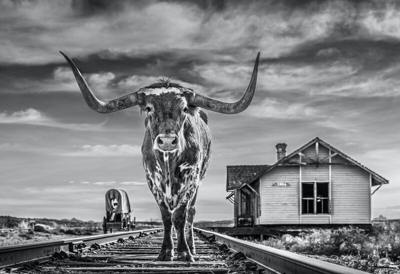 David Yarrow, 'End of the Line', 2020, Photography, Digital Pigment Print on Archival 315gsm Hahnemuhle Photo Rag Baryta Paper, Samuel Owen Gallery