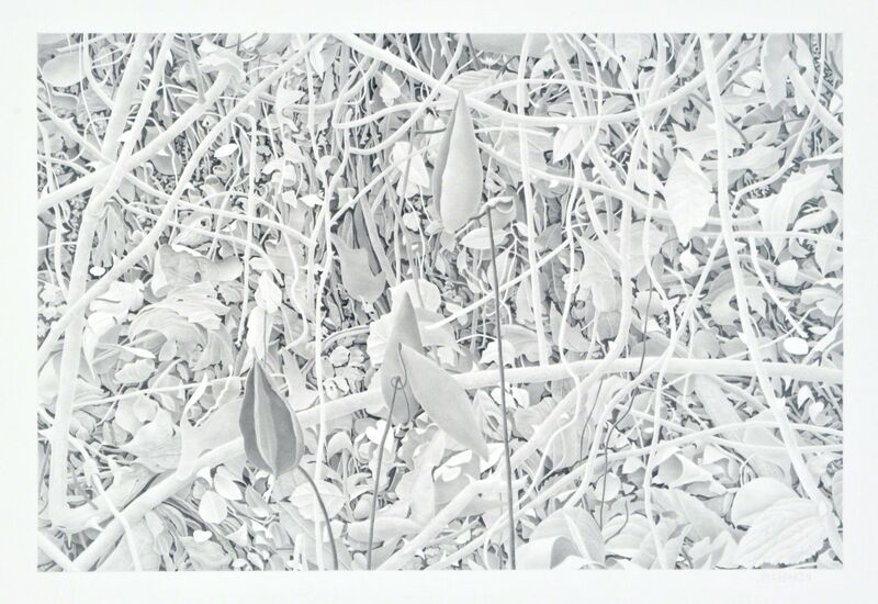 Bill Richards, 'Milkweed and Branches', 2010, Drawing, Collage or other Work on Paper, Graphite on paper, Nancy Hoffman Gallery