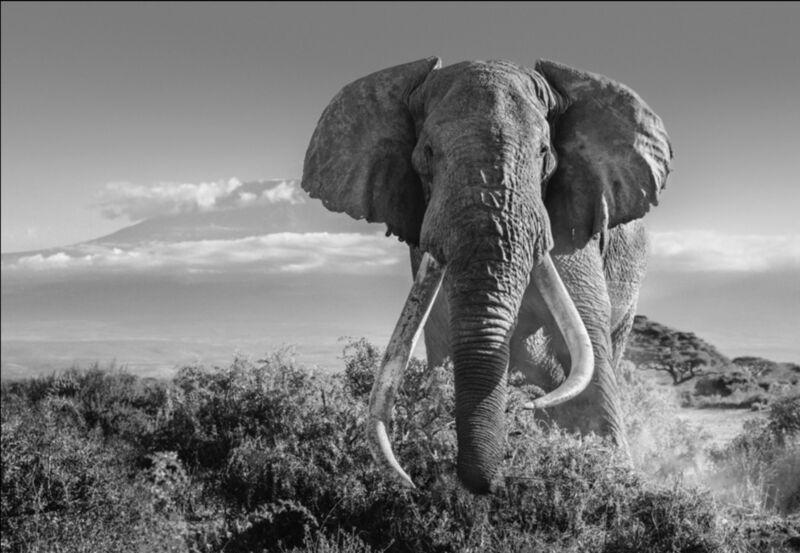 David Yarrow, 'Africa 2', 2020, Photography, Silver Gelatin print, ArtLife Gallery