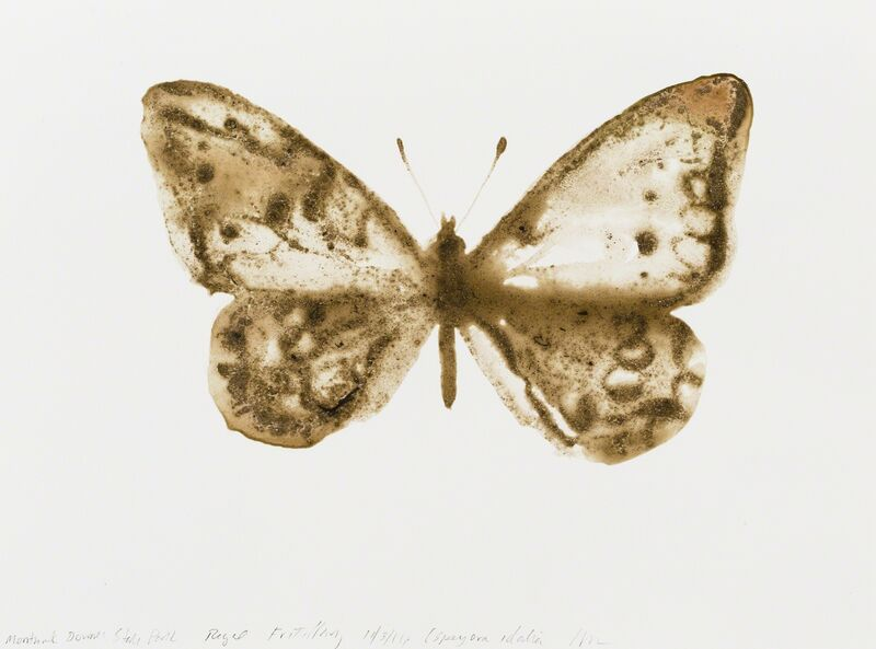 Alexis Rockman, 'Regal Fritillary (Speyeria idalia)', 2014, Drawing, Collage or other Work on Paper, Soil from Montauk Downs State Park and acrylic polymer on paper, Parrish Art Museum