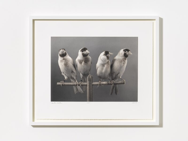 Carsten Höller, 'Four Birds', 2015, Photography, Photogravure on Somerset 300 gr, MASSIMODECARLO