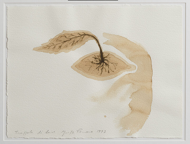 Giuseppe Penone, 'Trappola di luce', 1993, Drawing, Collage or other Work on Paper, Coffee on paper, Repetto Gallery