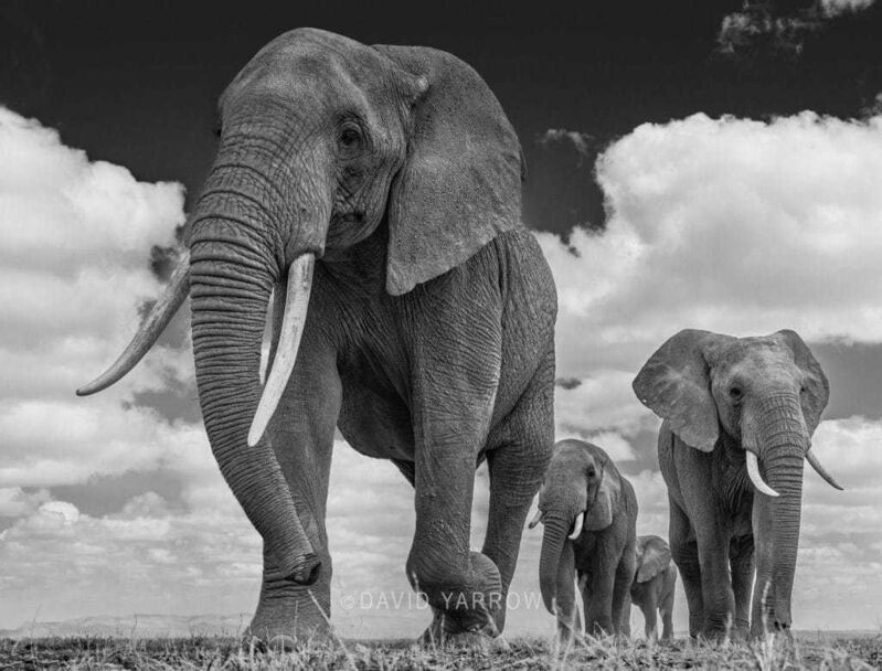 David Yarrow, 'The Garrison ', 2016, Photography, Archival Pigment print, A. Galerie
