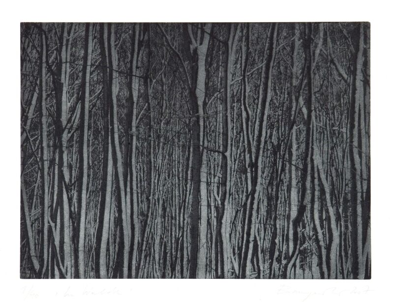 Christiane Baumgartner, 'Im Walde', 2007, Print, Heliogravure on paper, Cristea Roberts Gallery