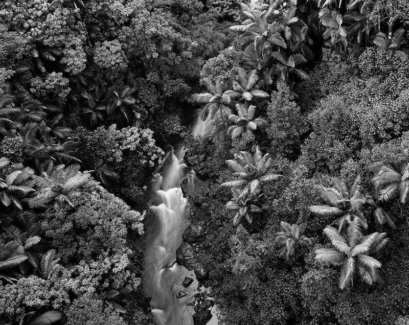 Stu Levy, 'Rainforest, Hawaii', 1989, Photography, Silver Gelatin Print, Gallery 270