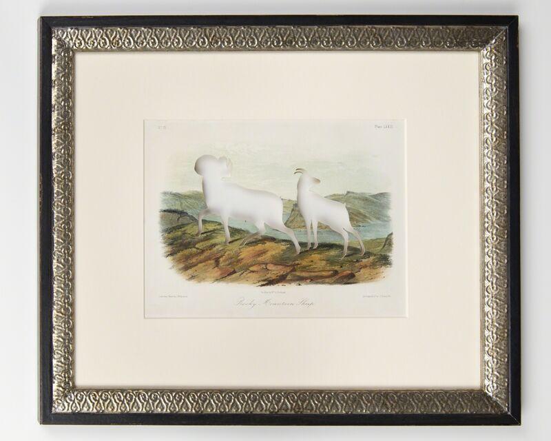 Brandon Ballengée, 'RIP Audubon's Bighorn Sheep: After John Woodhouse Audubon, 1849', 2014, Print, Artist cut and burnt hand colored stone lithograph, Ronald Feldman Gallery