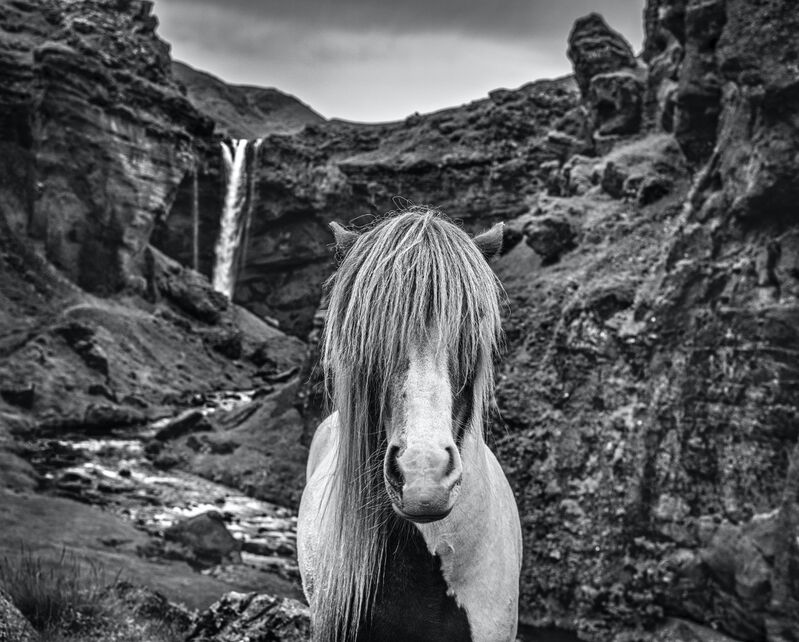 David Yarrow, 'Game of Thrones', 2020, Photography, Archival Pigment Print, Samuel Lynne Galleries