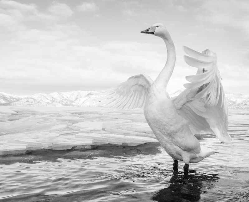 David Yarrow, 'Swan lake', 2017, Photography, Archival pigment print, A. Galerie