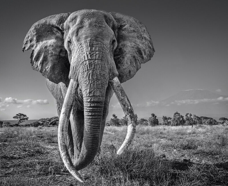 David Yarrow, 'Space For Giants', 2020, Photography, Archival Pigment Print, Samuel Lynne Galleries