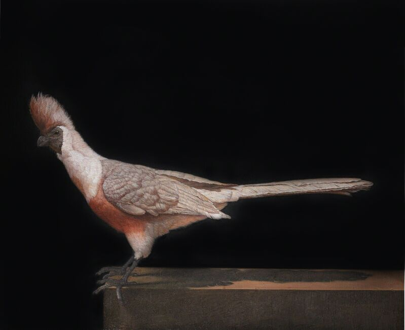 Patricia Traub, 'Barefaced Go-Away Bird', 2015, Painting, Oil on Linen, Gallery Henoch