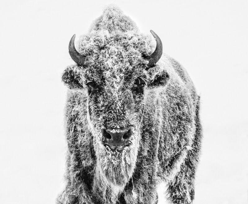 David Yarrow, 'Ice Age', 2020, Photography, Digital Pigment Print on Archival 315gsm Hahnemuhle Photo Rag Baryta Pape, Samuel Owen Gallery