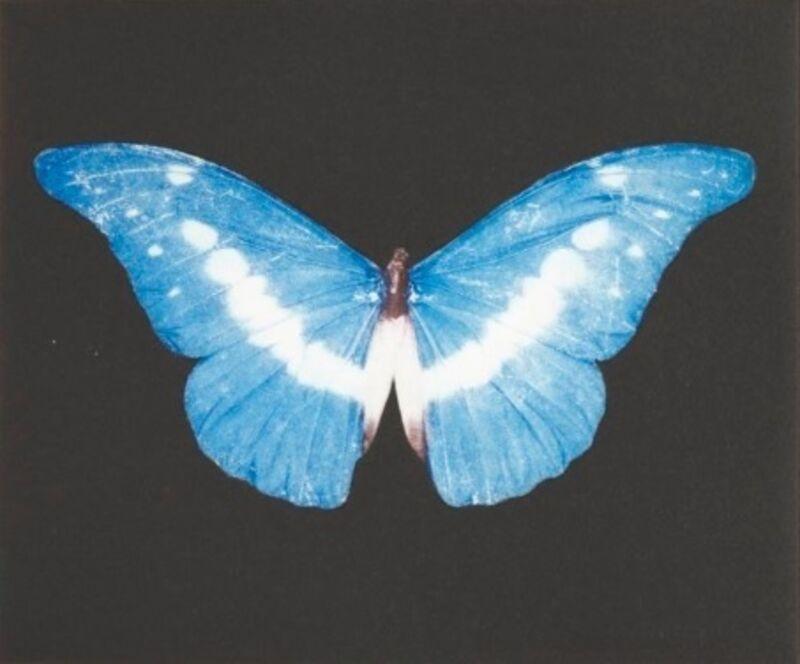 Damien Hirst, 'To Begin (Blue/ White Butterfly)', 2008, Print, Etching, Osborne Samuel