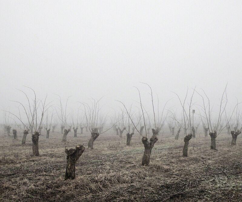 Tamas Dezso, 'Locust Trees (North-East Hungary, 2011)', 2011, Photography, Photography, The Photographers' Gallery | Print Sales