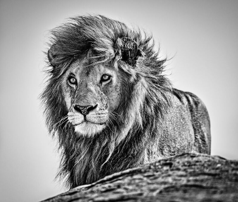 David Yarrow, 'The Cure', 2020, Photography, Archival Pigment Print, Samuel Lynne Galleries