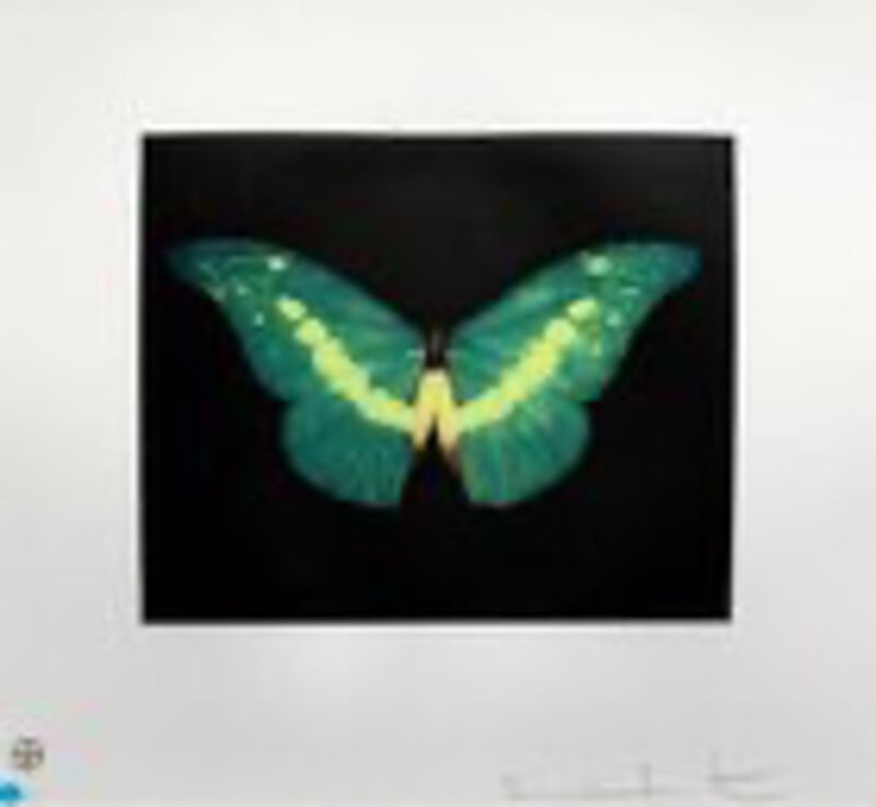 Damien Hirst, 'To belie', 2008, Print, Prints and multiples / Color etching, framed, New Art Editions