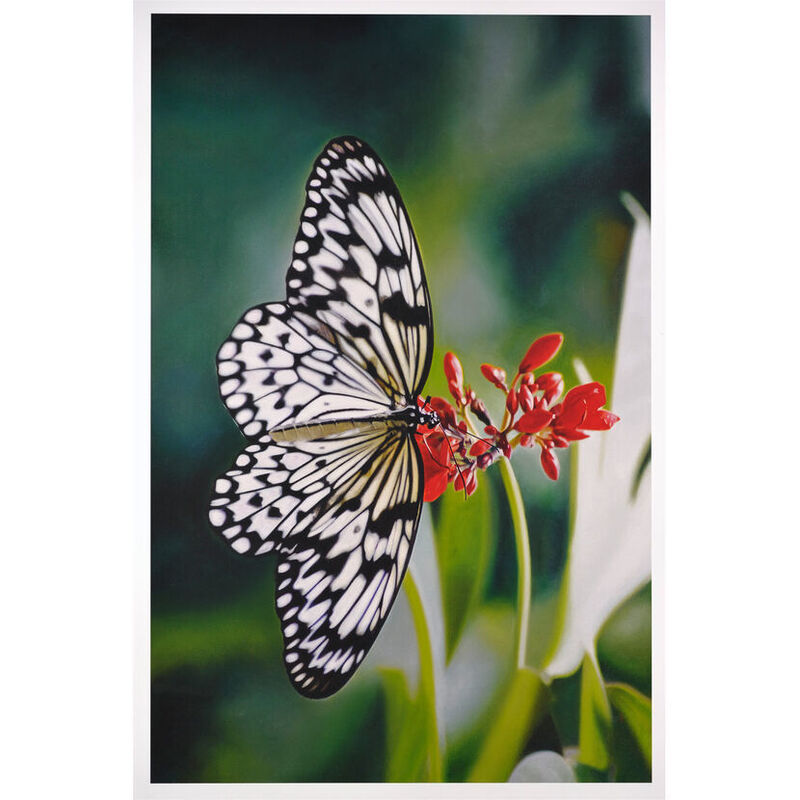 Damien Hirst, 'Paper Kite Butterfly on Oleander', 2011, Print, Inkjet Print, Weng Contemporary