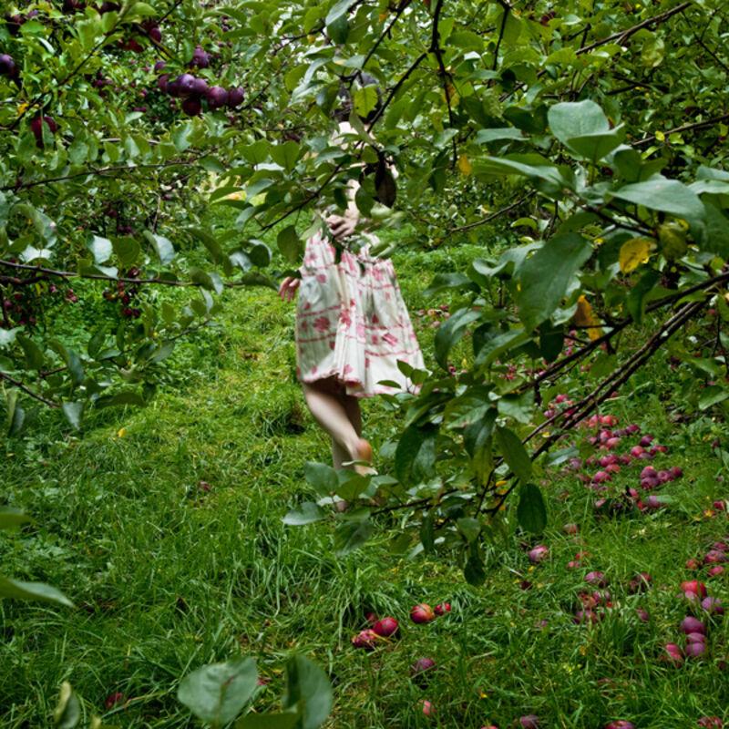 Cig Harvey, 'The Orchard, Ashlinn, Warren, Maine', 2012, Photography, Aluminum, Robert Mann Gallery