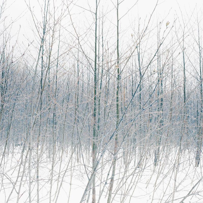 Debra Bloomfield, 'Wilderness 38055-7-08', 2008, Photography, Pigment ink print, Robert Koch Gallery