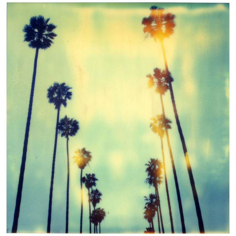 Stefanie Schneider, 'Palm Trees on Wilcox (Stranger than Paradise)', 1999, Photography, Digital C-Print based on a Polaroid, not mounted, Instantdreams