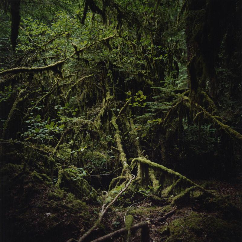 Jason Frank Rothenberg, 'Moss', 2007, Photography, Archival pigment print, Sears-Peyton Gallery