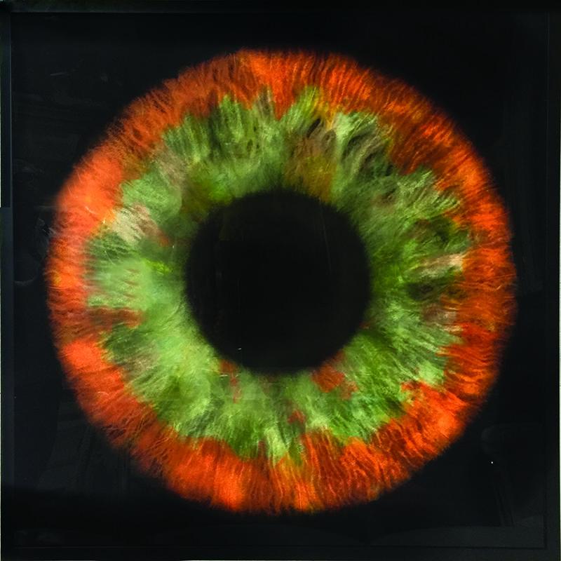 Daniel Gastaud, 'Iris Flowers', Mixed Media, Feathers under Plexiglas, Eden Fine Art