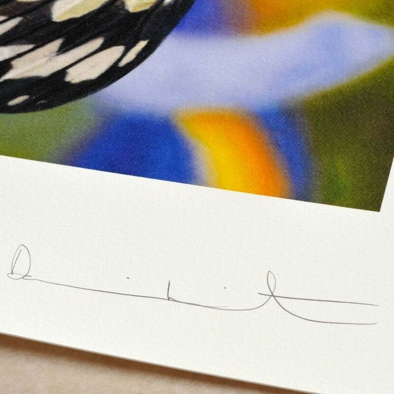 Damien Hirst, 'Paper Kite Butterfly on Spanish Iris', 2011, Print, Inkjet Print, Weng Contemporary