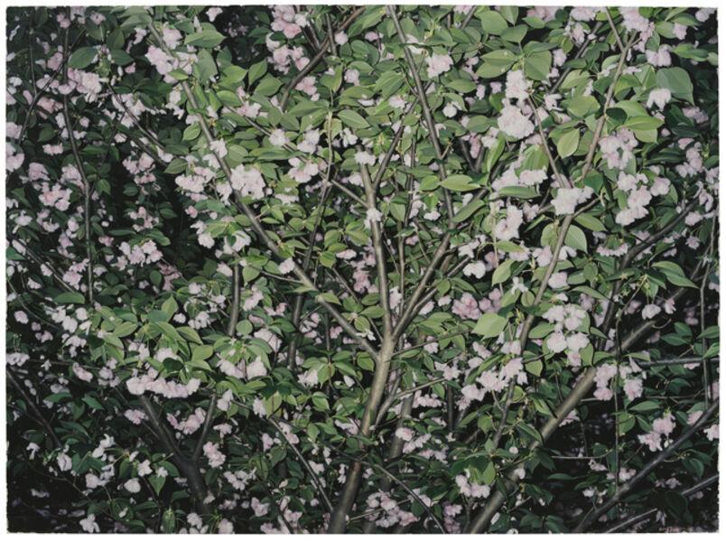 GONG Jian, 'A Portrait for a Tree NO.12', 2018