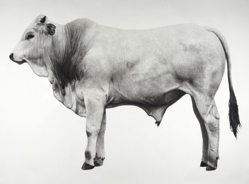 Jonathan Delafield Cook, 'Calf', 2016