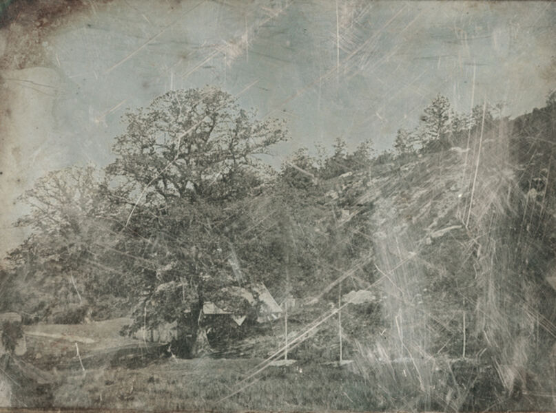 Hippolyte Bayard, 'Trees on Property of the Château of Dampierre', 1845c / 1845c