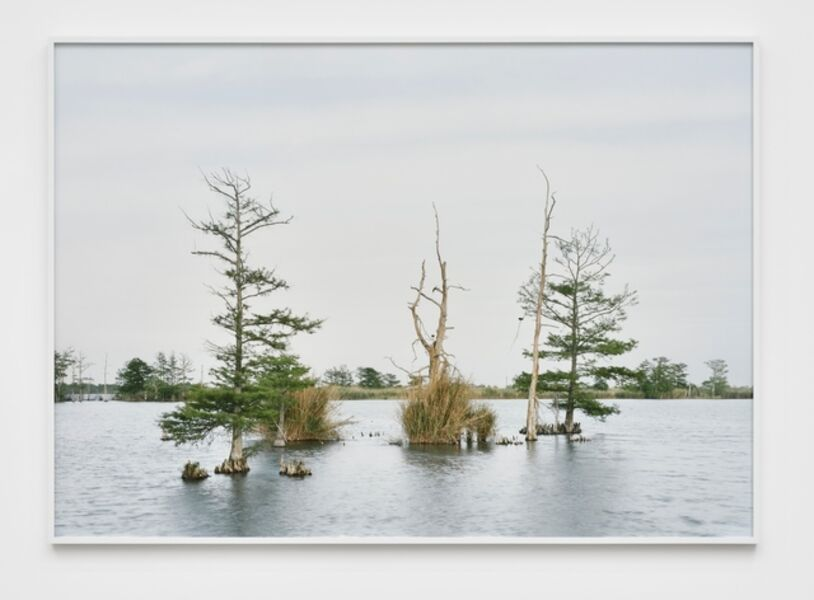 An-My Lê, 'April 17, Swamp, Venice, Louisiana, from The Silent General', 2016