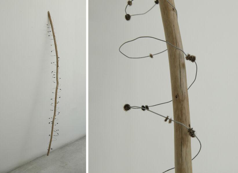Sol Pipkin, 'Rama y conos en espiral', 2016