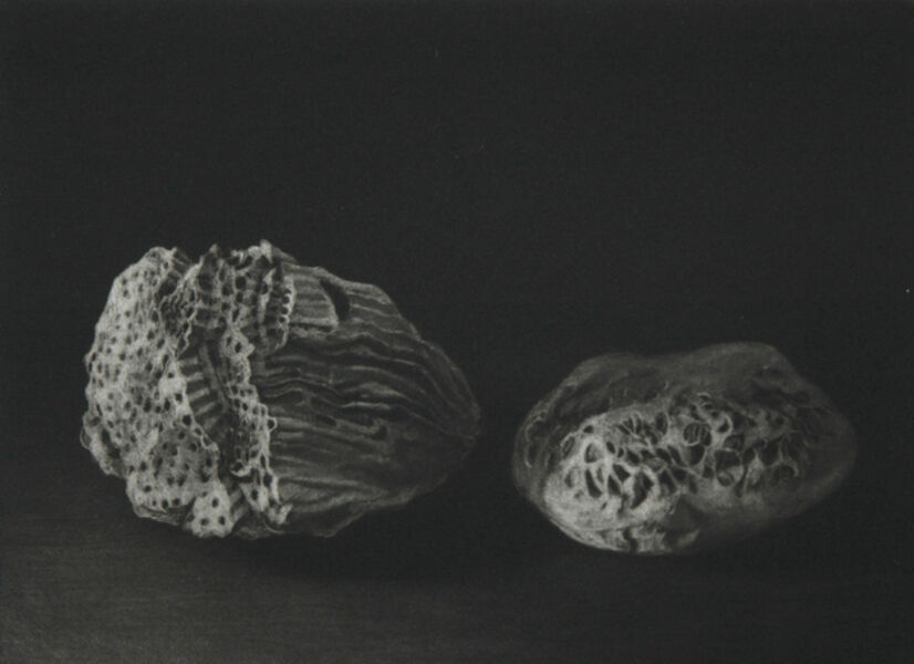 Judith Rothchild, 'Fossiles', 2014