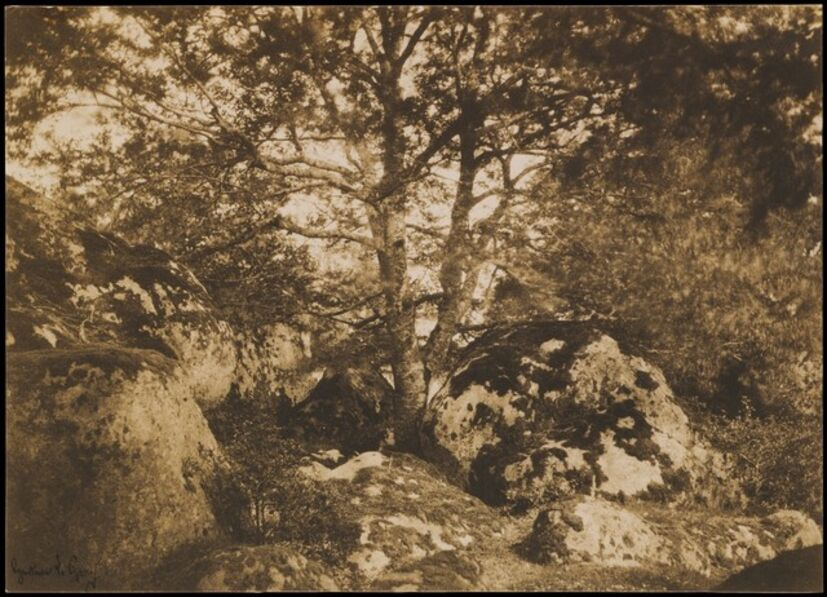 Gustave Le Gray, '[Oak Tree and Rocks, Forest of Fontainebleau]', 1849–1852