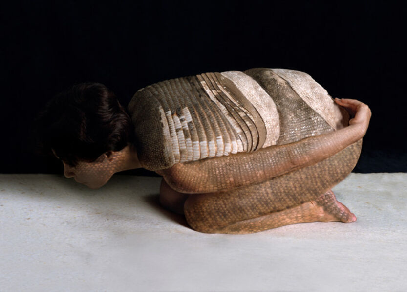 Cecilia Paredes, 'Armadillo', 2002
