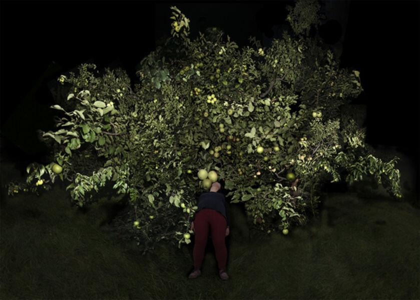 Fan Xi, 'Tree- 1  ', 2015